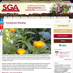 Companion Planting – Sustainable Gardening Australia