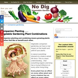 Companion Planting - Vegetable Gardening Plant Companions and Combining