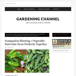 Companion Planting: 7 Vegetable Pairs that Grow Perfectly Together