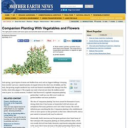 Companion Planting With Vegetables and Flowers - Organic Gardening