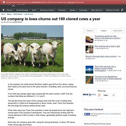 US company in Iowa churns out 100 cloned cows a year