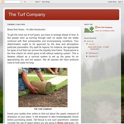 The Turf Company: Boise Sod Grass – A Little Introduction