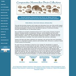 Comparative Mammalian Brain Collections - StumbleUpon