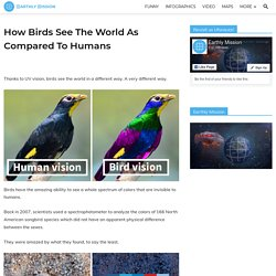 How Birds See The World As Compared To Humans - Earthly Mission