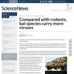 Compared with rodents, bat species carry more viruses