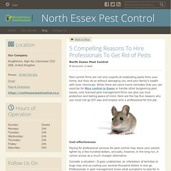 5 Compelling Reasons To Hire Professionals To Get Rid of Pests - North Essex Pest Control : powered by Doodlekit