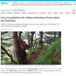Une compilation de vidéos exclusives d'ours dans les Pyrénées