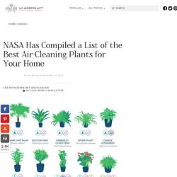 NASA Has Compiled a List of the Best Air-Cleaning Plants for Your Home - My Modern Met