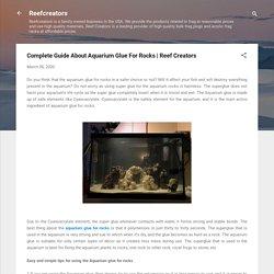 Complete Guide About Aquarium Glue For Rocks