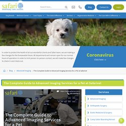 The Complete Guide to Advanced Imaging Services for a Pet at Safarivet - Safari Veterinary Care Centers