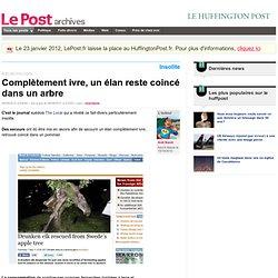 Complètement ivre, un élan reste coincé dans un arbre - Anti Nanti sur LePost.fr (21:04)