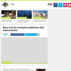 Bees Can Do Complex Additions And Subtractions