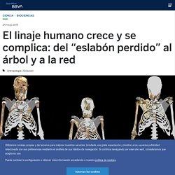 """El linaje humano crece y se complica: del """"eslabón perdido"""" al árbol y a la red"""