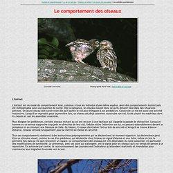 Comportement des oiseaux