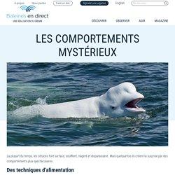 Les comportements mystérieux - Baleines en direct