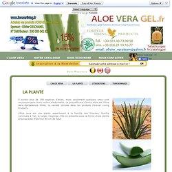 Aloe Vera Gel.fr - Composition de la plante aloe vera : enzymes, mineraux, acides aminés