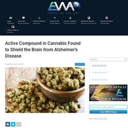 EWAO Active Compound in Cannabis Found to Shield the Brain from Alzheimer's Disease