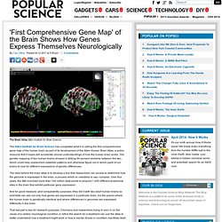 'First Comprehensive Gene Map' of the Brain Shows How Genes Express Themselves Neurologically