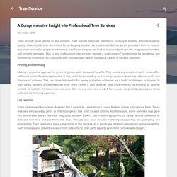 A Comprehensive Insight Into Professional Tree Services