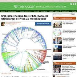First comprehensive Tree of Life illustrates relationships between 2.3 million species
