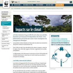 Comprendre l'impact de la forêt sur le climat
