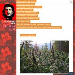Dix choses que vous devez savoir pour comprendre le vrai potentiel du cannabis médicinal.