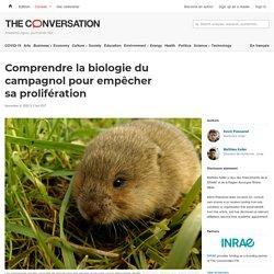 Comprendre la biologie du campagnol pour empêcher sa prolifération