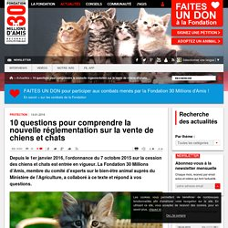 10 questions pour comprendre la nouvelle réglementation sur la vente de chiens et chats