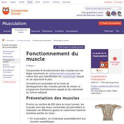 Fonctionnement muscle : infos sur le fonctionnement des muscles