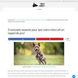 3 concepts de pro pour éviter les fugues & avoir un chien qui écoute!