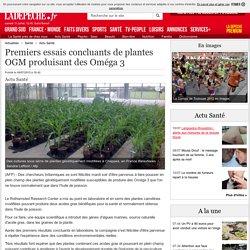 Premiers essais concluants de plantes OGM produisant des Oméga 3 - 08/07/2015 - ladepeche.fr