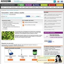 Concombre : semer, cultiver et récolter des concombres - Jardin potager