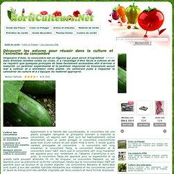 Le concombre, une plante potagère facile à cultiver