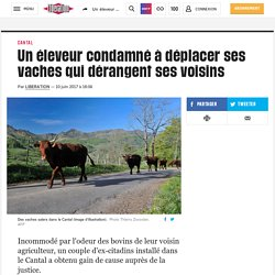 Un éleveur condamné à déplacer ses vaches qui dérangent ses voisins