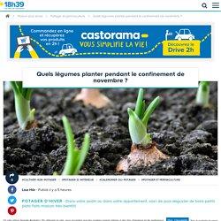 Confinement : quels légumes planter en novembre et quand les récolter ?