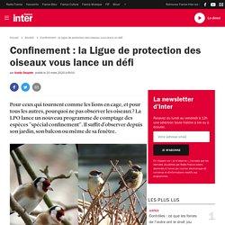 Confinement : la Ligue de protection des oiseaux vous lance un défi