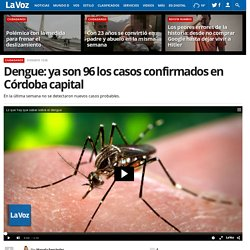 Dengue: ya son 96 los casos confirmados en Córdoba capital