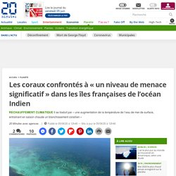 Les coraux confrontés à «un niveau de menace significatif» dans les îles françaises de l'océan Indien