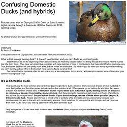 Confusing Domestic Ducks