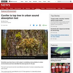 Conifer is top tree in urban sound absorption test