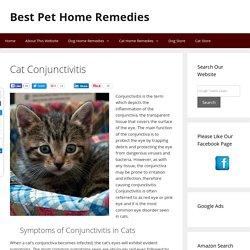 Cat Conjunctivitis - Best Pet Home Remedies