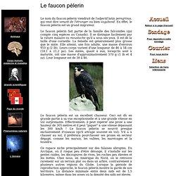Site de la connaissance - Le faucon pèlerin