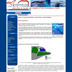 Connaissances Générales - Communication - Chant des Baleines