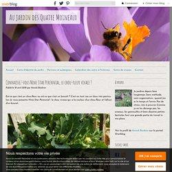 Connaissez-vous Nine Star Perennial, le chou-fleur vivace ? - Au jardin des Quatre Moineaux