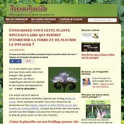 Connaissez-vous la phacélie, cette plante engrais mellifère qui fleurit le potager ?