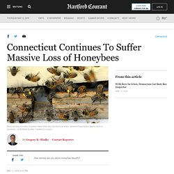 Connecticut Continues To Suffer Massive Losses of Honeybees