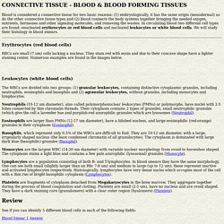 CONNECTIVE TISSUE - BLOOD BLOODFORMING TISSUES