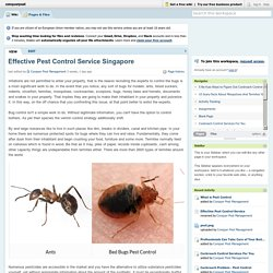 Cockroach Control Services For You