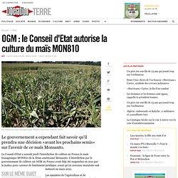 OGM: le Conseil d'Etat lève l'interdiction de cultiver le maïs MON810