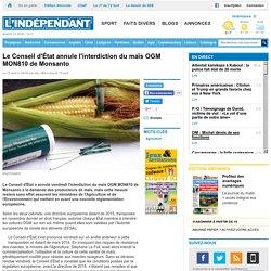 Le Conseil d'État annule l'interdiction du maïs OGM MON810 de Monsanto